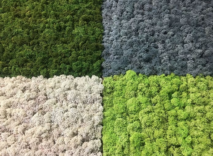 695-Zielone-ściany-z-mchu