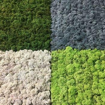 Zielone-ściany-z-mchu