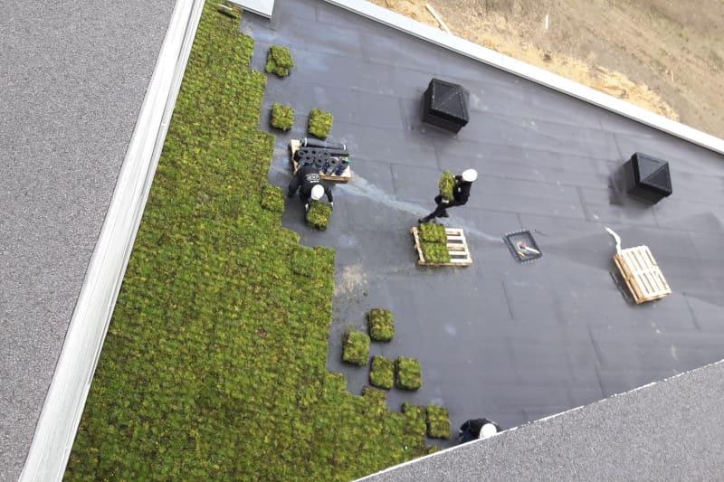 montaż zielonego dachu